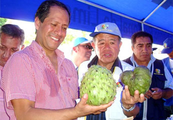 Otro de los productos peruanos es la chirimoya cultivado en los andes de nuestro país.