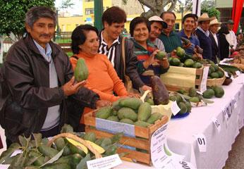 Participarán  todos los agricultores de la provincia de Cañete.