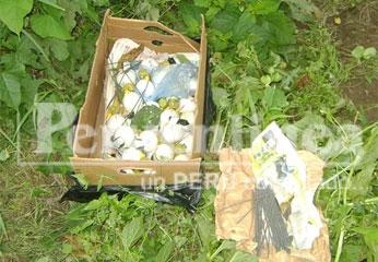 Granadas fueron halladas dentro de una caja de carton.