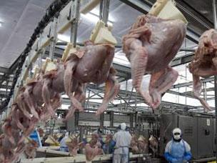 Virus H1N1 detectado en pavos es el mismo que afecta a humanos, indican.